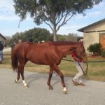 Beaux Chpix At the Pleasant Acres #StallionShow #Ocala http://t.co/osuf1H0hnp