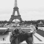 @mikasounds Oh, la, La ; https://t.co/j03b9ojSGt - shell always have Paris ! #MEL #MIKAsDog in #PARIS :)
