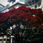 Xmas in Welly #WhyWellington #TheTerrace #pohutukawa http://t.co/Srv4y3IDdm