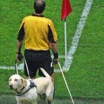 My view of the linesman today at #nffc http://t.co/pdLbq1JGLd