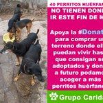 Apoya la #Donatón por 40 perritos huérfanos que no tienen a donde ir. Dona a la cta cte s/. 000-9695532. @latiachuchi http://t.co/Wm0ebSYvrj