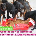 Apoya a estos 40 perritos huérfanos con alimento en Av. Tomás Marsano 4391 Surco las 24 horas @latiachuchi http://t.co/eQS2eFnheF