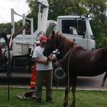 Mira la conmovedora reacción de un caballo tras ser liberado (VIDEO) http://t.co/QxQJZKtOWP http://t.co/OMhFwZOpKM