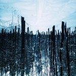 Перед Новым Годом все вверх дном.#HNY#VSCOcam#Ufa#Russia#Forest#Winter#winter #hny #ufa #vscocam #russia #forest http://t.co/Mf2rlMo8RL