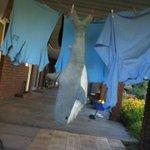 In Australia we even get sharks in our washing machines. #Straya http://t.co/eYdw2lfZvj