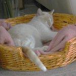#Perdu: #Chat roux/ beige nommé diabolo à seltz (67) (coupe siamois) http://t.co/aYsDpu8Abn http://t.co/Dm0AEeY5dh