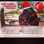 What a sunny day it is in #Ibiza!! Come and visit Can Horses and Care4Cats Christmas party today!! #care4cats ???????? http://t.co/otkkg8s4v4