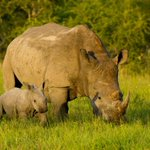 My big idea for 2015: Its Time to End Poaching https://t.co/fozWBopyPK http://t.co/Yt69APVtlF