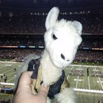 Angry Ingram Llama is in the Dome! He is ready to #justdostuff @saints @rbarnola @MarkIngram22 http://t.co/7TaIcoNo5F