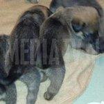 Elf verwaarloosde pups in beslag genomen door #Dierenpolitie in #Rotterdam : http://t.co/0HwbFNdaAx http://t.co/jDAsxFpzlA
