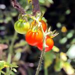 ¿Ha probado la ensalada de nido con tomatillo, o los cuchillos de flor de poró con huevo? http://t.co/1KxblYEOGs http://t.co/z379lZNDsT