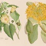[明日から開催] キャプテン・クック一行が見た、18世紀の知られざる植物『バンクス花譜集』展が渋谷で開催 - http://t.co/5CJjZjhN3C http://t.co/33WB7cvRp9