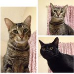 My friend @hey_erma is trying to find homes for her 3 cats. If you can foster or take one of them in, please help. http://t.co/oFvupc3sms