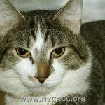 #URGENT #NYC #CATS handsome KJ needs our help before 12/22-PLS RT/adopt/foster/pledge! https://t.co/cDASlkW4pB http://t.co/VUyXgqpsxe