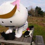 【動画公開しました】「先日、田代島でねこさんたちとあそんできた動画ができましたよ!みてね!」 「むすび丸の【伊達な旅】日記」猫の島田代島編: http://t.co/7QQm5TwR1D #むすび丸 http://t.co/WgBaY8PGwP