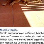 Perrito busca a sus dueños🙏 encontrado en coviefi  #antofagasta @Vero_Animalista @pamelagato http://t.co/ZczYqnK5b9