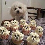 #MasterChefEnLLamas #MasterChefChile esta ternura de cupcakes conquistaría al jurado <3 http://t.co/7c6t53ZIeD