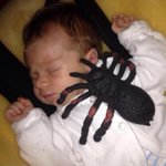 Remember when I put a huge plastic spider on theo best uncle in the world ! #WeAreAllNiall #WeAreAllNiallFollowParty http://t.co/wfpi8XuWaU
