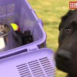 The CFS and @rspcasa are urging South Australians to include their pets in their bushfire survival plans. #9Newscomau http://t.co/vLMf81CLpW