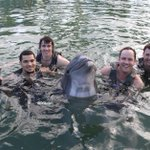 PHOTO ALBUM: Mens Basketball swimming with dolphins in Hawaii https://t.co/y8zbfnqpzp #WATCHUS http://t.co/VQGhTKOW46