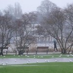 #Hamburg - Regen, Regen, Regen! Alsterwiesen stehen in Teilen bereits unter Wasser #Wetter http://t.co/twtdjIDVcV