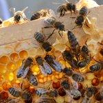 Urban beekeeping project hopes to get Dublin buzzing http://t.co/94Fai7B10q http://t.co/0az4Z49SXq