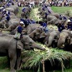 #Thailandia, nel parco giochi dove invecchiano gli elefanti http://t.co/00N5Ta7kW2 di @franolivo2 http://t.co/WMjb2ZE4Dp