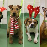 Please give us a home for #Christmas! @BhamDogsHome http://t.co/DUi12WFwQq http://t.co/ulPpJ9c88u