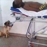 VÍDEO: Cão persegue ambulância para não se afastar do dono no DF http://t.co/NqskIFYDVa #G1 http://t.co/PoXsNHi69i