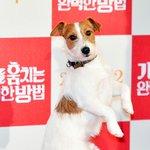 犬、映画「犬を盗む完ぺきな方法」VIP試写会(12/22) http://t.co/9pCrW9iVGF