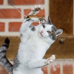 Fotógrafo flagra momento exato em que gato capturava rato na Alemanha http://t.co/yCkzYJ3pnw #G1PlanetaBizarro http://t.co/5wcghw00bo