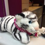Alert! Lost Teddy, found today in #York station. Please RT and help us find the owner of the #YorkTiger. http://t.co/NFLuu64cDd