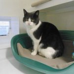 Can you give these needy pets new homes? @RSPCA_official http://t.co/wG1OTIJq3p http://t.co/5qbtpeWHY5