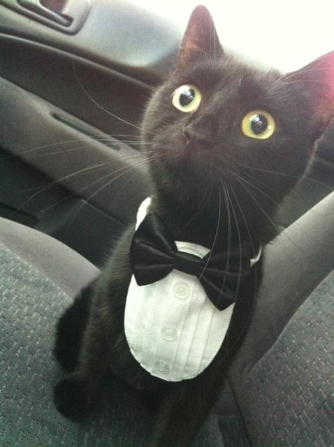 What do you mean, vet's office? YOU SAID WE WERE GOING TO THE PHILHARMONIC! - Imgur http://t.co/PmoGHhARA0 http://t.co/qZQV78yKks