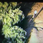 Wildlife officials on scene now, trying to track down a bear near Ellsworth and Pecos in Mesa http://t.co/2EyONE421V