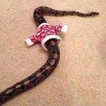 El outfit navideño de alguna #SeMuerdeYSeEnvenena #MalBicho http://t.co/ImPC1b4Pz9