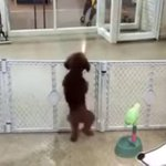 No creature is happier right now than this pup spotting its owner at doggy daycare. http://t.co/ApNKa8lblZ http://t.co/gJQe1ESeQF