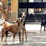 Delhi: Police rescue 26 stray dogs from Vasant Kunj house http://t.co/FxnbK9NiJy http://t.co/Zo94FmFLn9