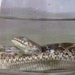 Dona de casa encontra serpente em alface na hora de preparar salada http://t.co/aFhzKcdi13 #G1 http://t.co/wcjk5P4mBv