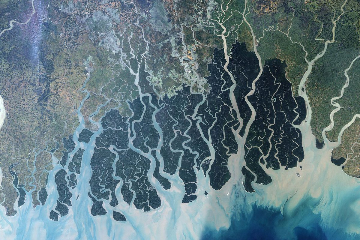"nothing says ""Anthropocene"" like a tar slick in a World Heritage Site http://t.co/9OjOqOnvO9 #SundarbansOilSpill http://t.co/nLOscj8pqn"