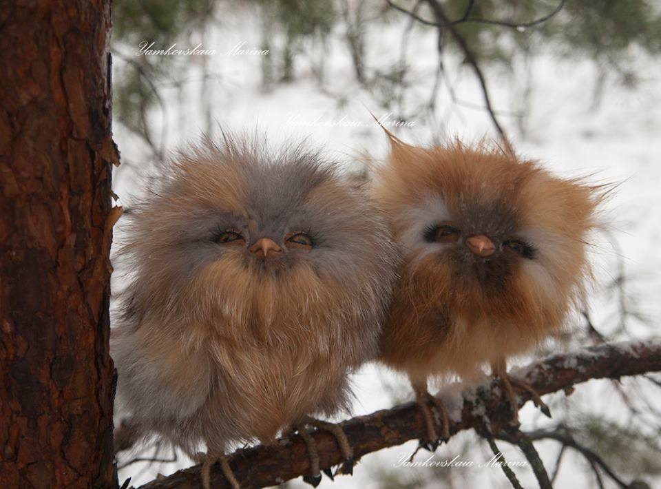 and here are some kitteny looking owls - just because. http://t.co/YviCnk1HxG