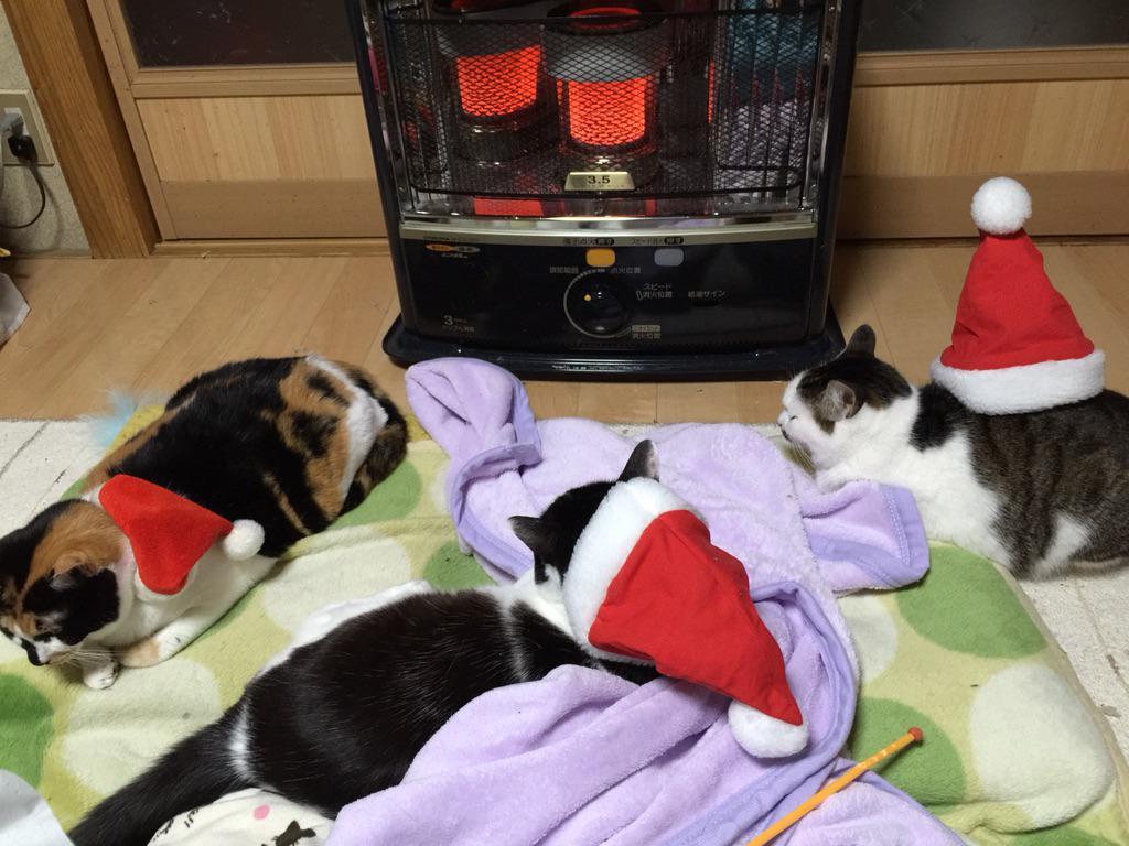 3た・・・・w RT @mohukari うちのサンタ餅は今日のネコ歩きはあんま興味でないみたい、、、 http://t.co/E0M9rsjWss