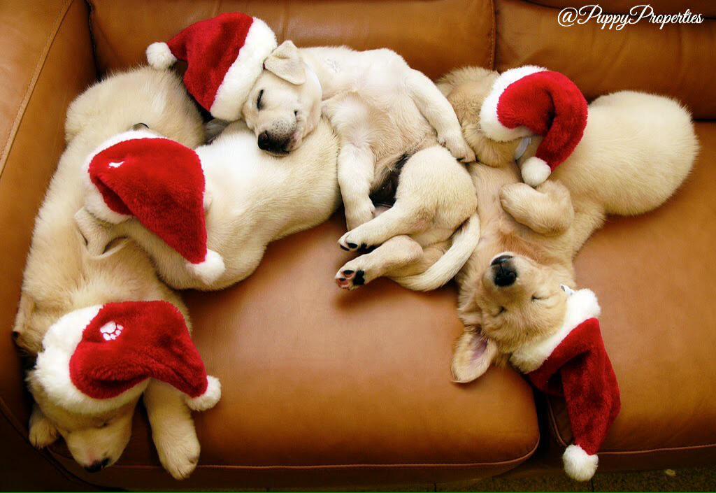 Merry Christmas! ❄️❤️⛄️ http://t.co/qmZ1rQtWxs