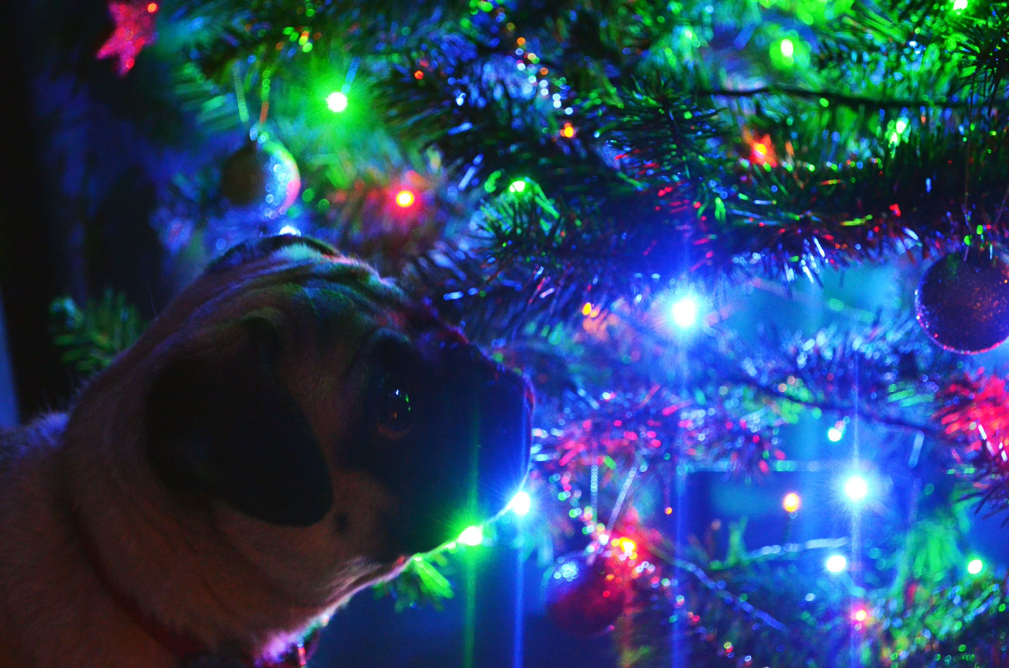 Merry Christmas! http://t.co/is3EzAKdtC