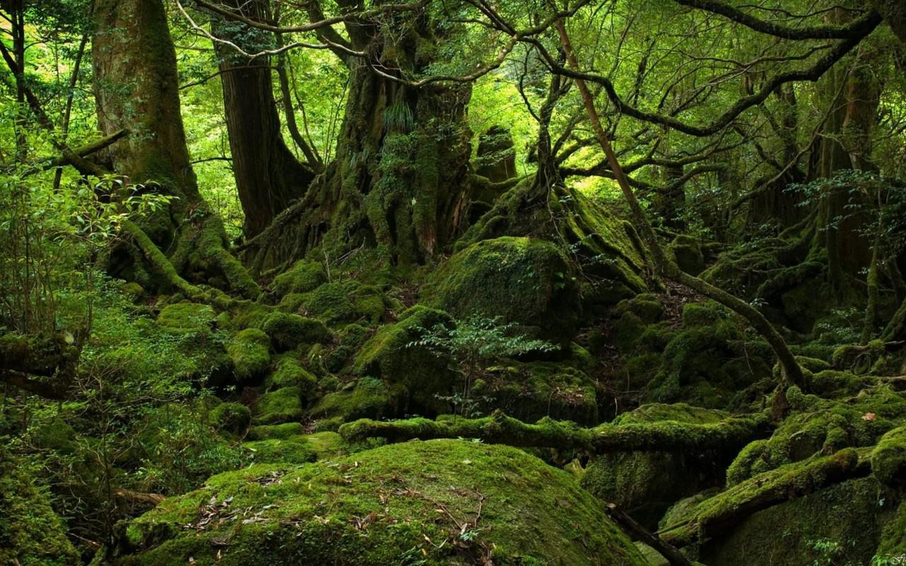 RT @PierreLabarbe: @lonelyplanetfr Au #Japon pour faire de la rando sur Yakushima, au sud de Kyushu. http://t.co/FtihiWOOGS