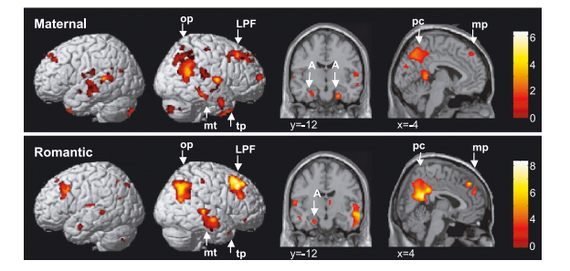 What Happens to a Woman's Brain When She Becomes a Mother http://t.co/sQPwpzti8B http://t.co/xdXZ1Je0XP