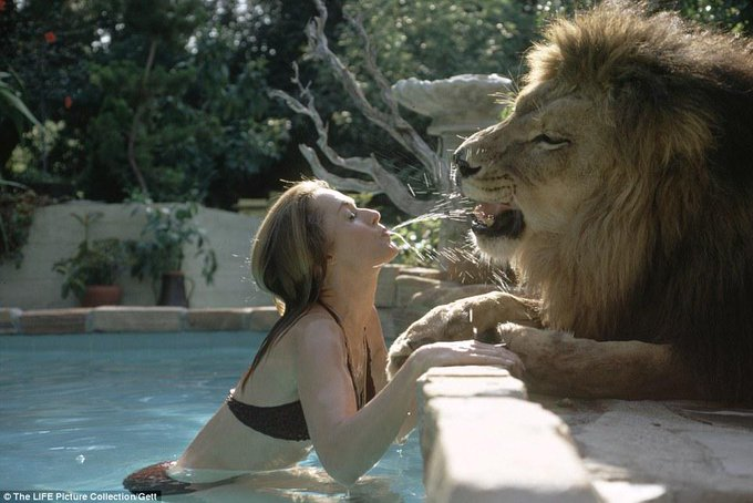 "RT @HistoryInFacts: Actress Tippi Hedren plays with her pet lion, 1971. ""We were stupid beyond belief"