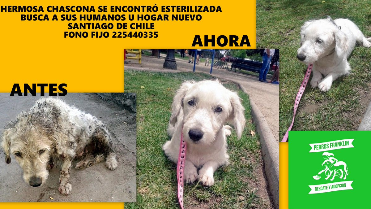 "#homeless #dog #Chile looking 4 furever #home. #adoption  ""@PerrosPlazaHuem: BENEDICTA Y SU BUSKEDA D HOGAR  http://t.co/aGRkFV8YmH"""