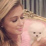 RT @HuffingtonPost: Paris Hilton named her newest dog after herself... http://t.co/81dxG5pR7g