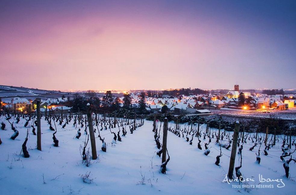 Pas mal de bouchons aussi à la station de Pommard où les pistes pinot noir sont très recherchées ;-) #bourgogne #vin http://t.co/0cp62CXHVh